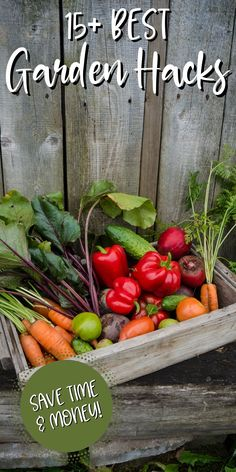 Growing your own food doesn't have to be expensive or all-consuming. Check out these 15 gardening tips to help your garden thrive with less work.