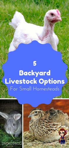 Backyard Livestock - 5 Great Options for the Small Homestead