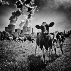 Carbon emissions http://www.blipfoto.com/schuh