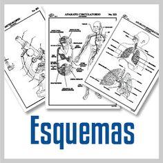 Esquema aparato circulatorio con nombres natural venta de esquemas grupo editorial raf material didactico y recreativo urtaz Images