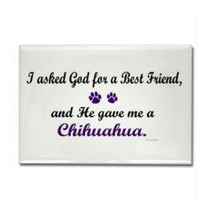 Chihuahua love! My sweet Chloe girl