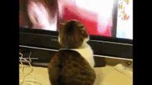 Shocked cat | Riffsy GIF Keyboard