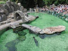 Zoo Praha (Gradina Zoologica din Praga) #praha #prague #praga Prague Attractions, Prague Zoo, Museums, Golf Courses, Water, Animals, Outdoor, Prague, Zoology