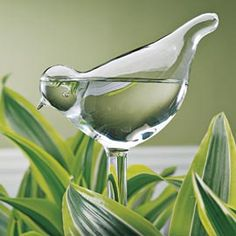 Bird Plant Feeders  Water your plants, even when you're away from home.