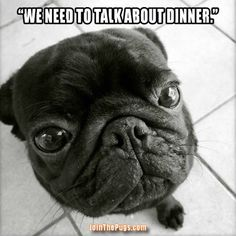 A Serious Pug Talk - Join the Pugs