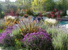 Google Image Result for http://images.landscapingnetwork.com/pictures/images/500x500Max/lawnless-landscaping_55/drought-tolerant-landscape-erin-s-gardens_604.jpg