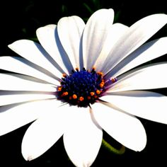 I love daisies...took this this morning.  It's spring!