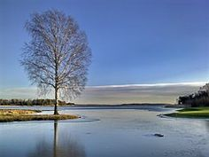Inverno, Lago, Albero, Campo Da Golf