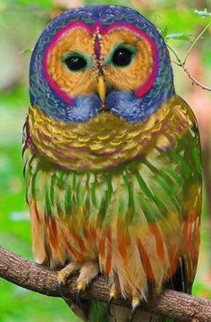 Psychedelic Owl Knows All