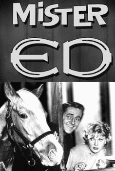 Ed Genire: American television sitcom produced by: Filmways Starring: Bamboo Harvester/ Mr Ed, Alan Young, Connie Hines One of the most iconic TV stars from the was& Childhood Tv Shows, My Childhood Memories, Vintage Tv, Vintage Movies, Talking Horses, Mister Ed, Viejo Hollywood, Mejores Series Tv, Old Shows