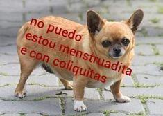 Gordito y cansadito: we worked out the creation of the best meme of 2019 (until now) – Memes Cute Memes, Funny Memes, Meme Meme, Dog Memes, Foto Meme, Relationship Memes, Sports Humor, Meme Faces, Mood Pics