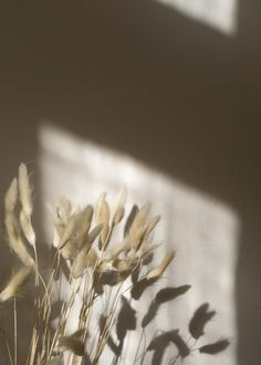 Dried Grass and Shadows ~ Simple For Everyday Slow Living Cream Aesthetic, Simple Aesthetic, Nature Aesthetic, Brown Aesthetic, Flower Aesthetic, Aesthetic Vintage, Aesthetic Light, Travel Aesthetic, Aesthetic Backgrounds