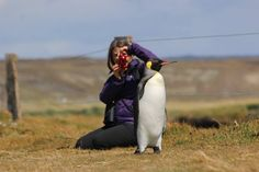 Parque Pinguino Rey - Patagonia Rey, Patagonia, Penguins, Animals, Sands, Fire, Earth, Islands, Parks