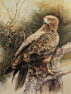 Tawny Eagle. Oil painting. Raptor. Wildlife Art, Cheryl, Bald Eagle, Van, Painting, Animals, Animais, Animales, Animaux