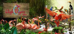 Jurong Bird Park 7