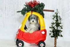 12 Dogs Who Messed Up the Holiday Card | WOOFipedia by The American Kennel Club