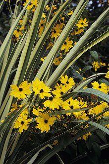 Green Spring Gardens  4603 Green Spring Road  Alexandria, Virginia