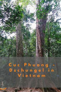 Cuc Phuong – im Dschungel von Vietnam