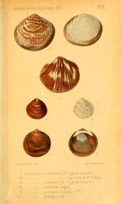 t 59 (1911-12) - Journal de conchyliologie. - Biodiversity Heritage Library