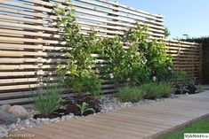 Climbing rose on the wooden fence When historical within thought, the pergola may be encountering Back Gardens, Outdoor Gardens, Scandinavian Garden, Garden Architecture, Garden Fencing, Garden Spaces, Dream Garden, Garden Projects, Backyard Landscaping