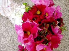 Beautiful farmers market flowers