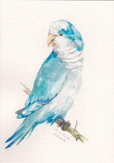 Original Watercolor Blue Quaker Parrot Parakeet https://www.facebook.com/artwork.friner #artforsale #watercolors #watercolor #watercolorpainting #bird #birds #etsy #parrot #bluecrownconure #lovey #pet