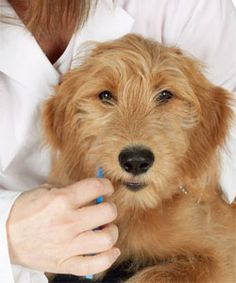 Brush Your Dog's Teeth in 5 Easy Steps