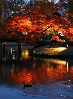 Twilight on the water in Tokyo Twilight, Tokyo, Trail, Gardens, Japanese, City, Water, Style, Gripe Water