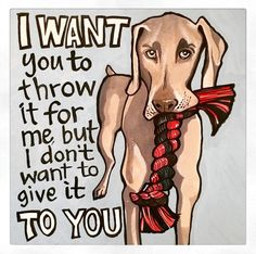 A personal favourite from my Etsy shop https://www.etsy.com/listing/225180706/weimaraner-attitude-square-blank-card