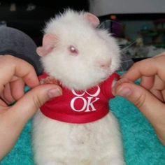 Rabbit, Cute, Bunny, Rabbits, Bunnies, Kawaii