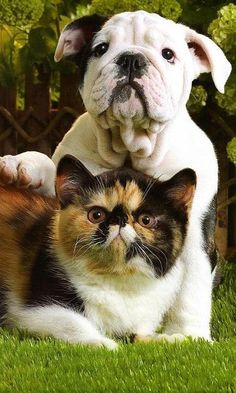 Cute Kitten and Puppy. Check it out; their facial expressions are the same. lol