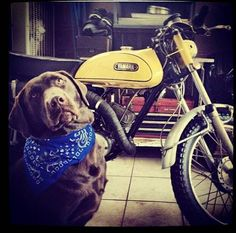 Great with Lab. Man's Two Best Friends! Random Stuff, Cool Stuff, Two Best Friends, Dirt Bikes, Street Bikes, Yamaha, Lab, Motorcycles, Pictures