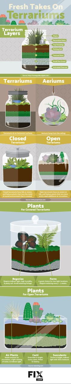 Gardening Indoor Making a micro-ecosystem to set anywhere in your home is easy! - Growing tiny plants in a micro-ecosystem is a great way to spruce up your home! Cacti And Succulents, Planting Succulents, Planting Flowers, Succulent Ideas, Succulent Care, Succulent Arrangements, Air Plants, Indoor Plants, Indoor Cactus