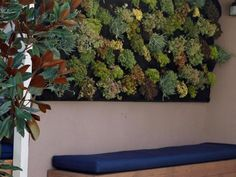 Jamie adds color to the existing wall by installing a bright vertical garden filled with succulents.