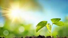 φως ηλιος - Google Search Zen, Plants, Google, Plant, Planets