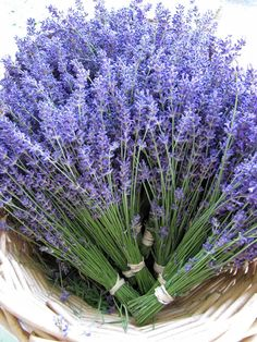 Lockwood Lavender Farm: Lockwood Lavender Farm Photos