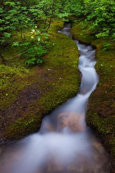 Alpine stream in Jasper National Park, Alberta_ Canada Jasper National Park, National Parks, Photo Mug, Physical Geography, Thing 1, America And Canada, Places Of Interest, Famous Places, Alberta Canada