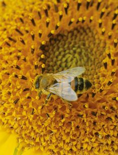 Here is a bee working hard to pollinate a flower.  Don't spray things to kill bugs.  It kills all of them.