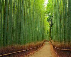 Sagano+Bamboo+Forest+Kyoto%2C+Japan.jpg (604×483)