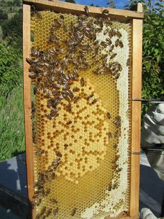My+advice+for+new+beekeepers