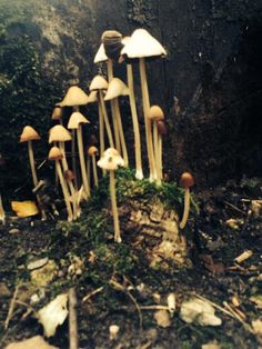 Submitted by @Gary Skent - Twitter - Autumn mushrooms #SnapWarrington