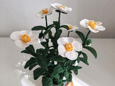 """""""Nella solitudine selvaggia, nel silenzio immenso e profondo il bianco fiore del Cisto """".    Ricordo un passaggio di una bellissima poes..."""