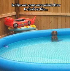 Just chillin in the pool
