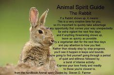 Spirit Animal Guides: The Rabbit Spirit Animal Totem, Animal Spirit Guides, Animal Totems, Rabbit Symbolism, Animal Symbolism, Reiki, Animal Meanings, Spiritual Animal, Spirituality