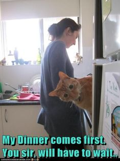 Lolcats - jokes - lol at funny cat memes - funny cat pictures with Cat Jokes, Funny Animal Memes, Funny Animals, Cute Animals, Funny Memes, I Love Cats, Crazy Cats, Cool Cats, Humor Animal