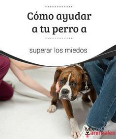 Cómo ayudar a tu perro a superar los miedos   Te contamos cómo puedes proceder para ayudar a tu perro a superar los miedos. Toma nota de los siguientes consejos. ¡No te los pierdas! #perro #miedo #consejos #ayuda