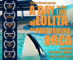 """""""A Day in the Life of Lolita the Performing Orca"""" Official Selection at the 2014 Big Apple Film Festival - Documentary short about Lolita the Orca featuring Dr. Ingrid Visser and directed by Daniel Azarian to screen at Tribeca Cinemas in New York City"""