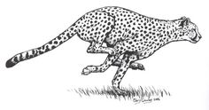 """During the month of October, I'll be doing an ink drawing daily going along with the theme of Inktober The first word is """"fast"""", so I decided to d. Inktober Day 1 Cheetah Running Cheetah Drawing, Cheetah Tattoo, Animal Sketches, Animal Drawings, Drawings To Trace, Running Drawing, Lion Sketch, Small Quote Tattoos, Lion King Art"""