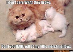 Protective mama... cats