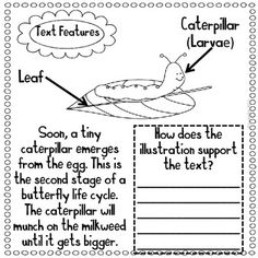 44 Best Second grade insect unit things images in 2016